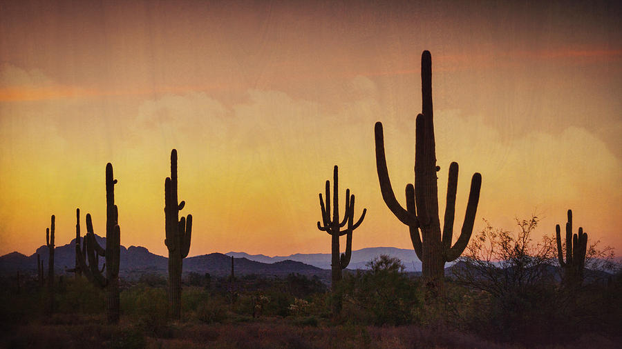 A Beautiful Desert Dawn by Saija Lehtonen