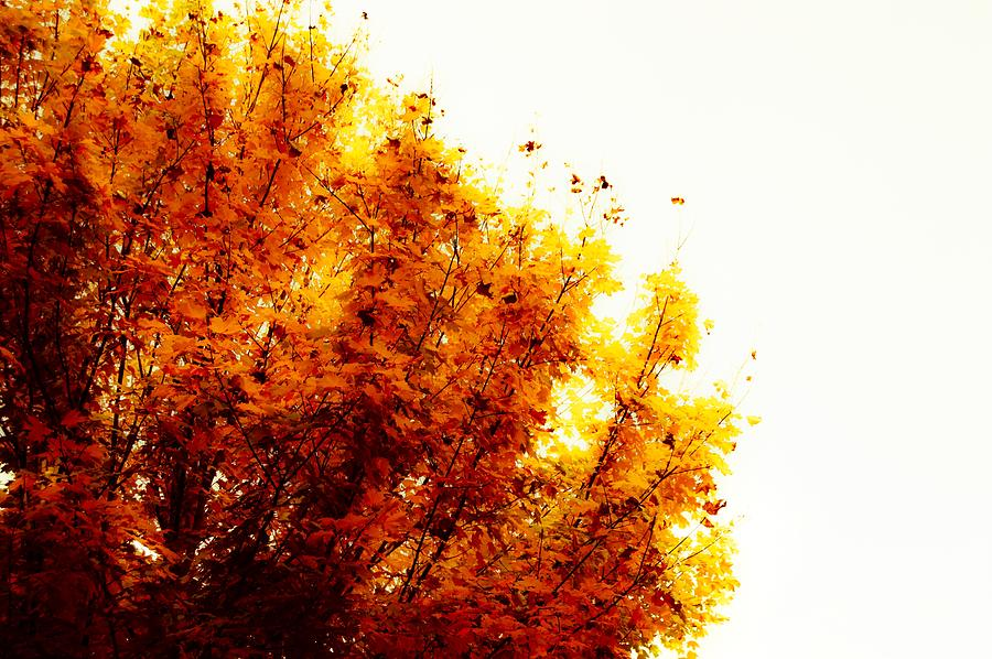 Tree Photograph - A Beautiful Fall Day by Angela Sherrer