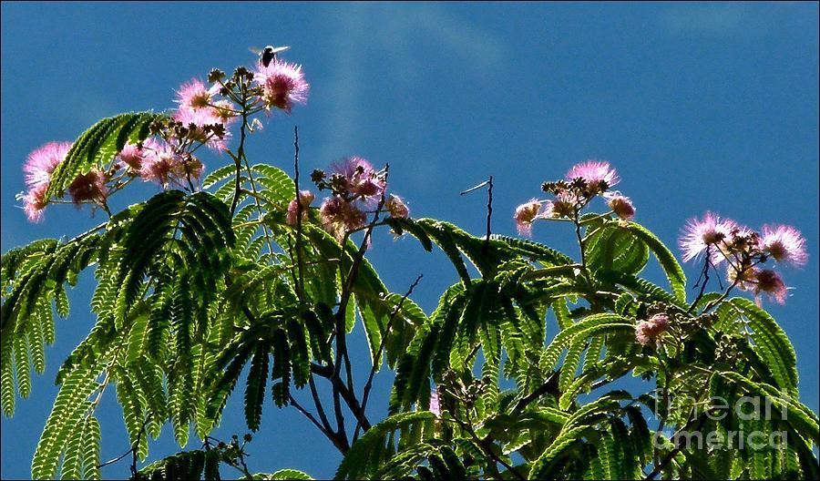 A Bee Heaven by Julia Hassett