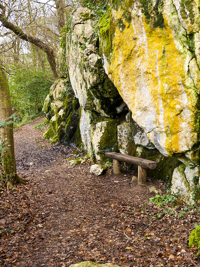 Blarney Photograph - A Bench In The Woods by Rae Tucker