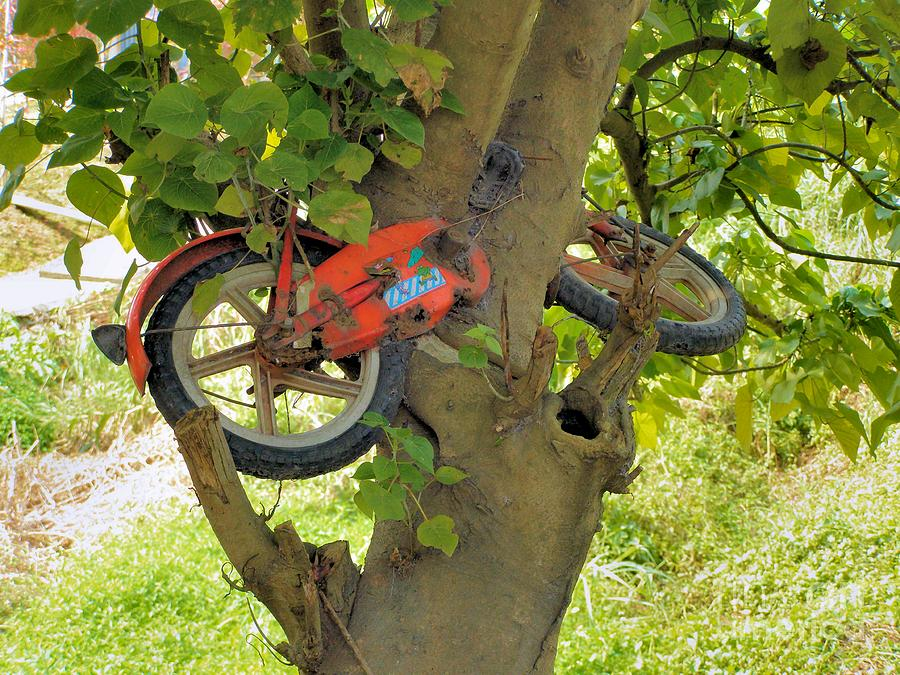 Odd Photograph - A Bike Growing In A Tree by Kathy Daxon