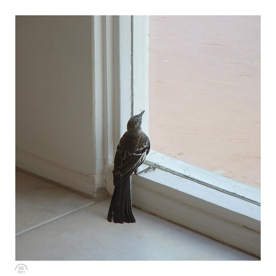 Fenestration Photograph - A Bird At A Plate Glass Window by Stan  Magnan