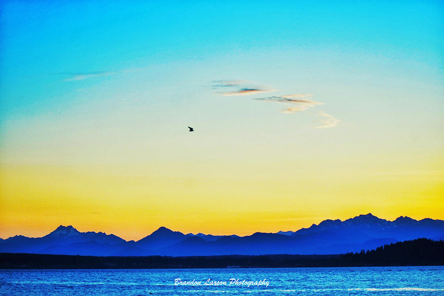 A Bird In The Sky At Sunset Photograph by Brandon Larson