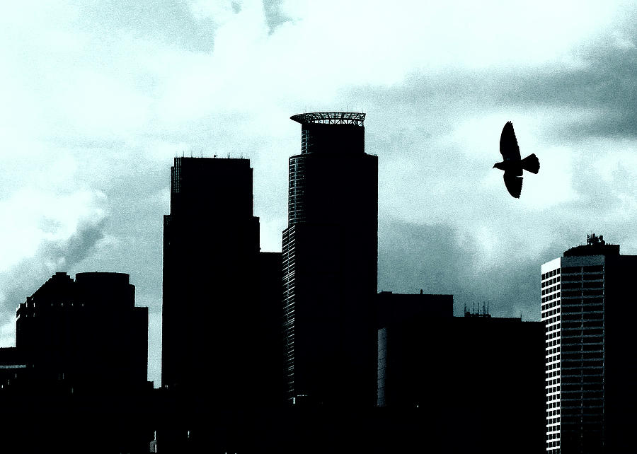 Minneapolis Skyline Photograph - A Birds View Of Minneapolis by Susan Stone