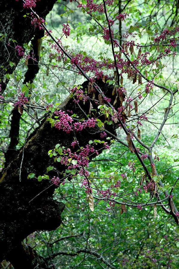A Bit Of Color Photograph by Brigid Nelson