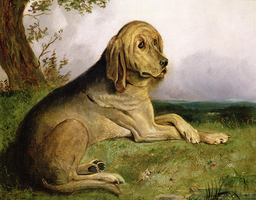 Bloodhound Painting - A Bloodhound In A Landscape by English school