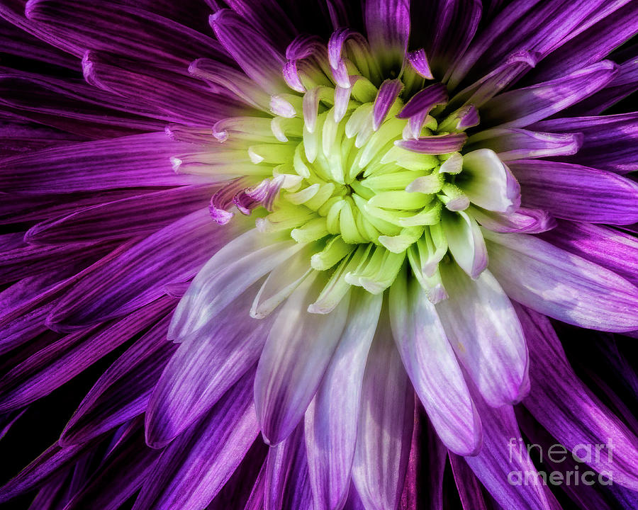 Flower Photograph - A Blooms Unfolding by Madonna Martin