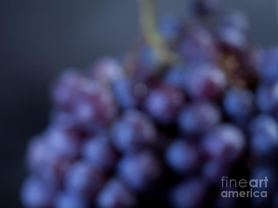 Grapes Photograph - A Blue Bunch Of Grapes by Patricia Bainter