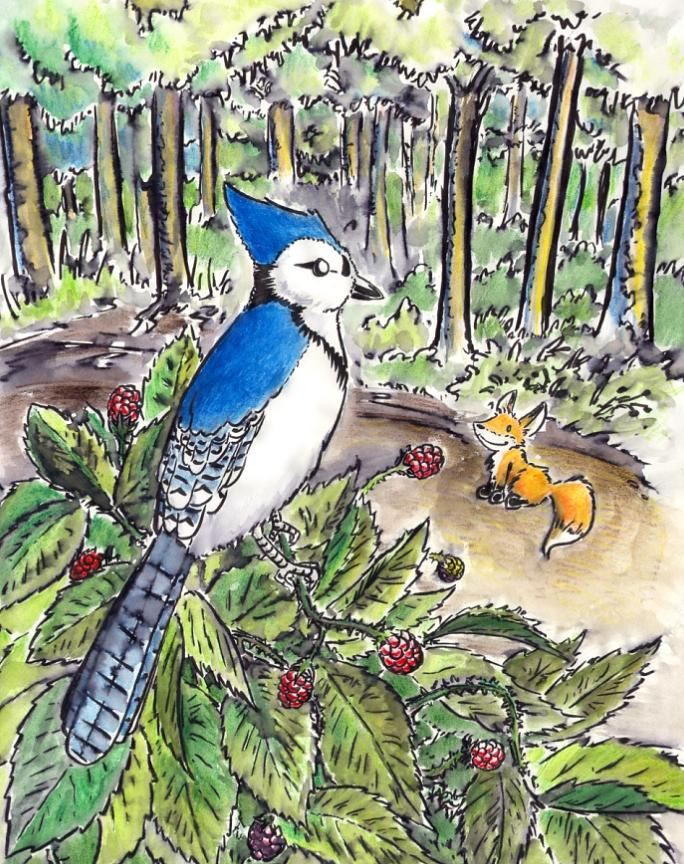 Wox Painting - A Bluejay Was Sitting On A Large Raspberry Bush by C Casey Gardiner