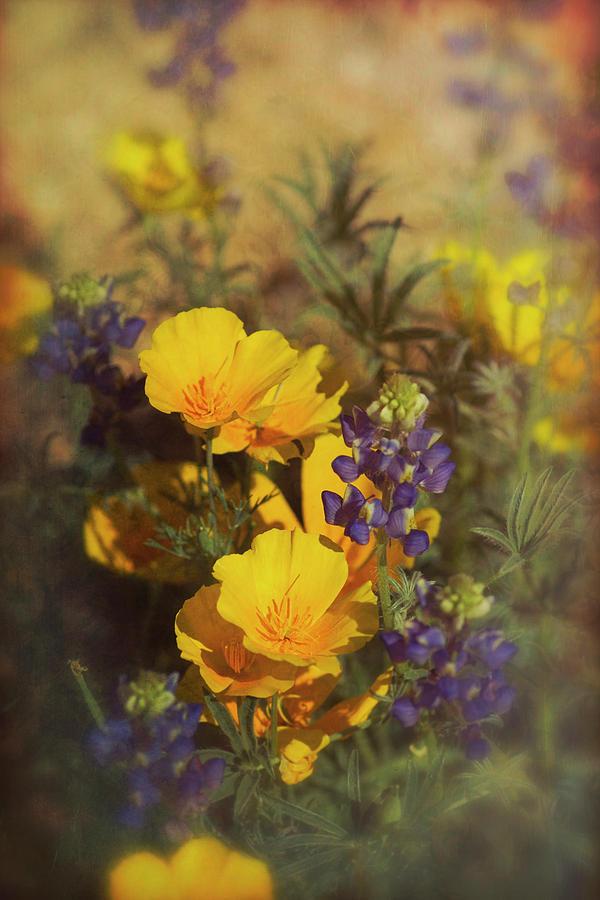 Spring Photograph - A Bouquet Of Spring  by Saija Lehtonen