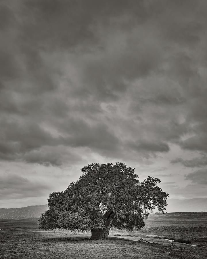 Santa Ysabel Photograph - A Broad Trunk Oak by Joseph Smith