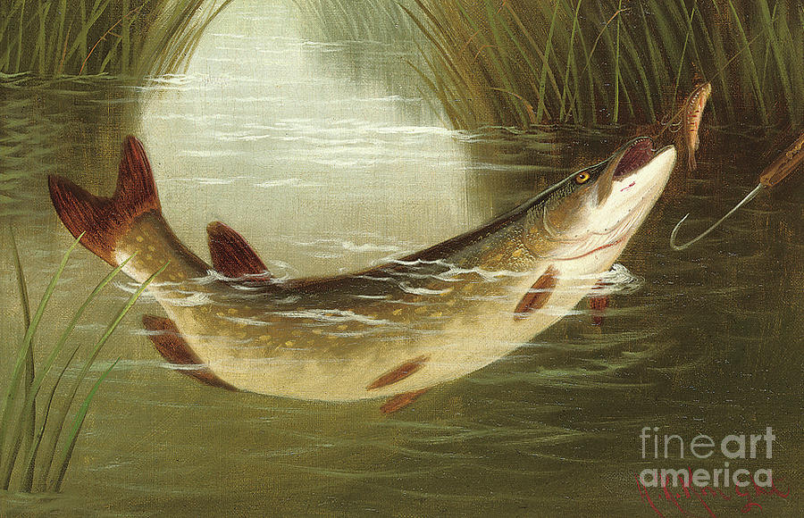 Fish Painting - A Brown Trout Coming To The Gaff  by A Roland Knight
