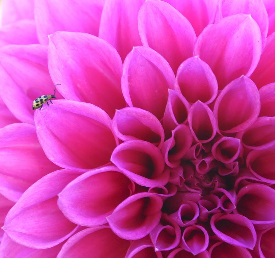 Flower Photograph - A Bug by Danielle Miller