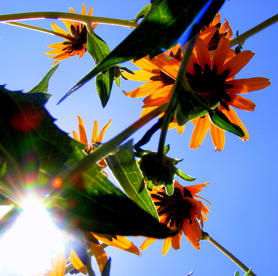 Burst Photograph - A Burst Of Sunshine by Sherwanda Irvin