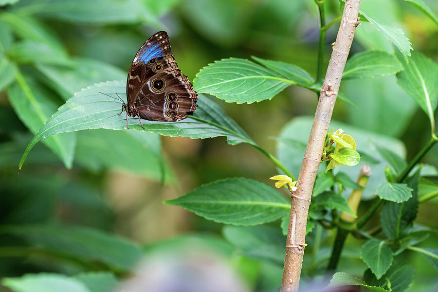 Butterfly Photograph - A Butterfly Waiting by Raphael Lopez