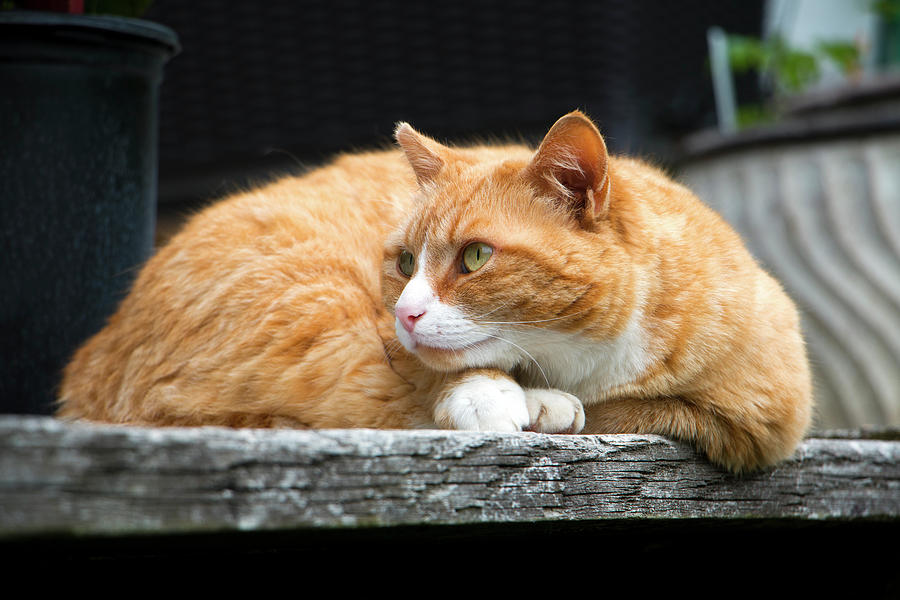Cat Photograph - A Cat Named kitty by Jeff Severson