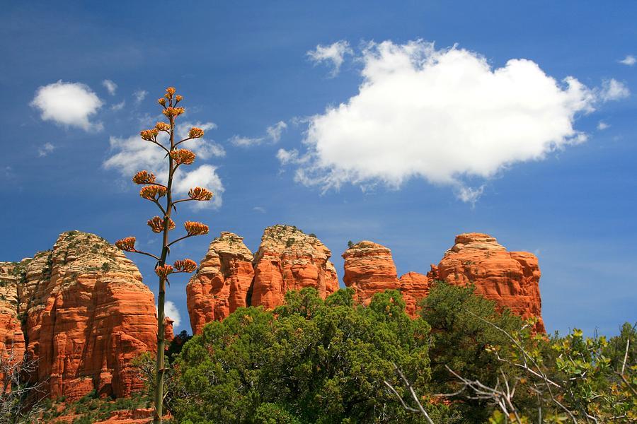 Arizona Photograph - A Century Above by Miles Stites