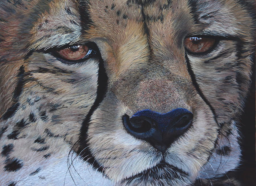 Cheetah Painting - A Cheetah by Vicky Path