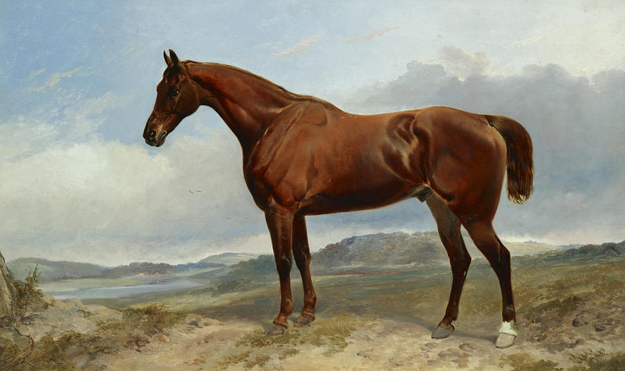Brown Horse Painting - A Chestnut Hunter In A Landscape by Richard Ansdell