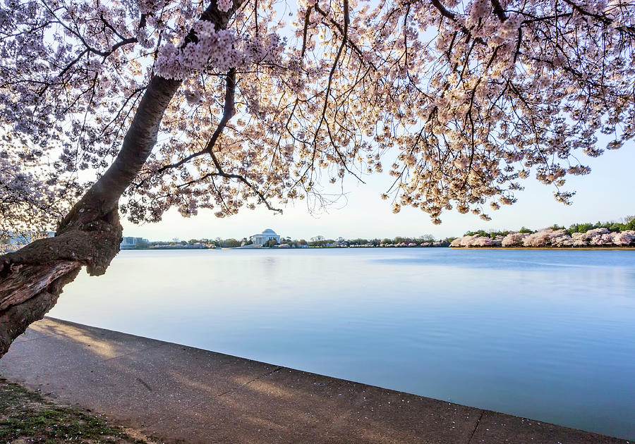 Cherry Blossoms Photograph - A Classic by Edward Kreis