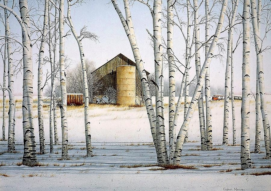 Rural Painting - A Cluster Of Birch by Conrad Mieschke