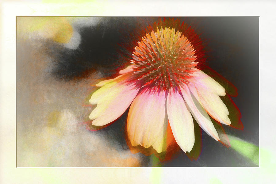 A colorful Coneflower with bokeh by Natalie Rotman Cote