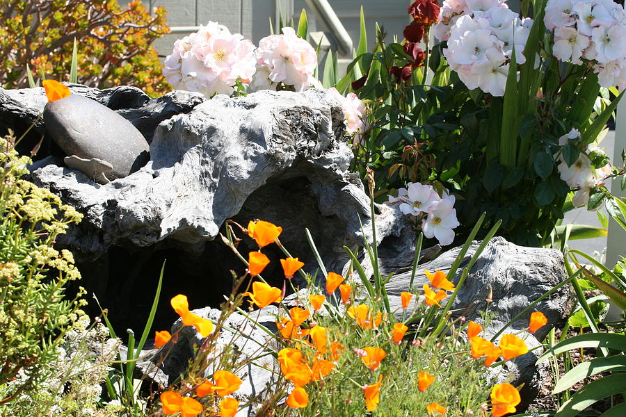 Flowers Photograph - A Corner Of Peace by Wendi Curtis