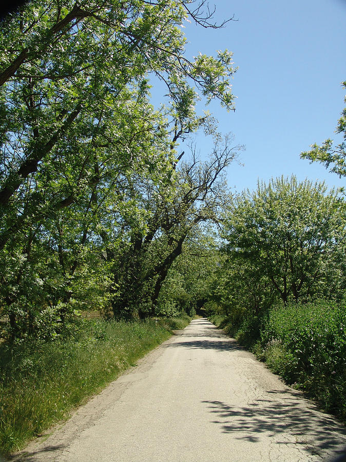 Trees Photograph - A Country Road by Marty Moon