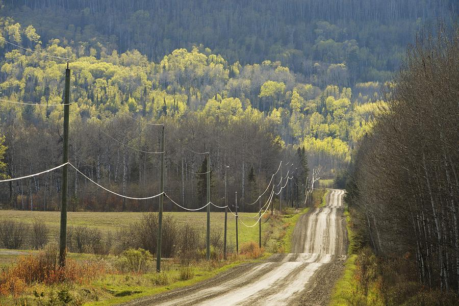 A Country Road With Electrical Wires Photograph By Susan