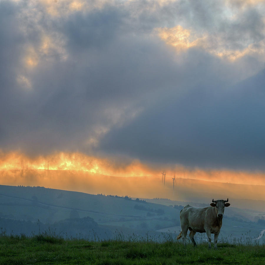 Galicia Photograph - A Cow In The High Prairies  At Sunset by Luis Vilanova