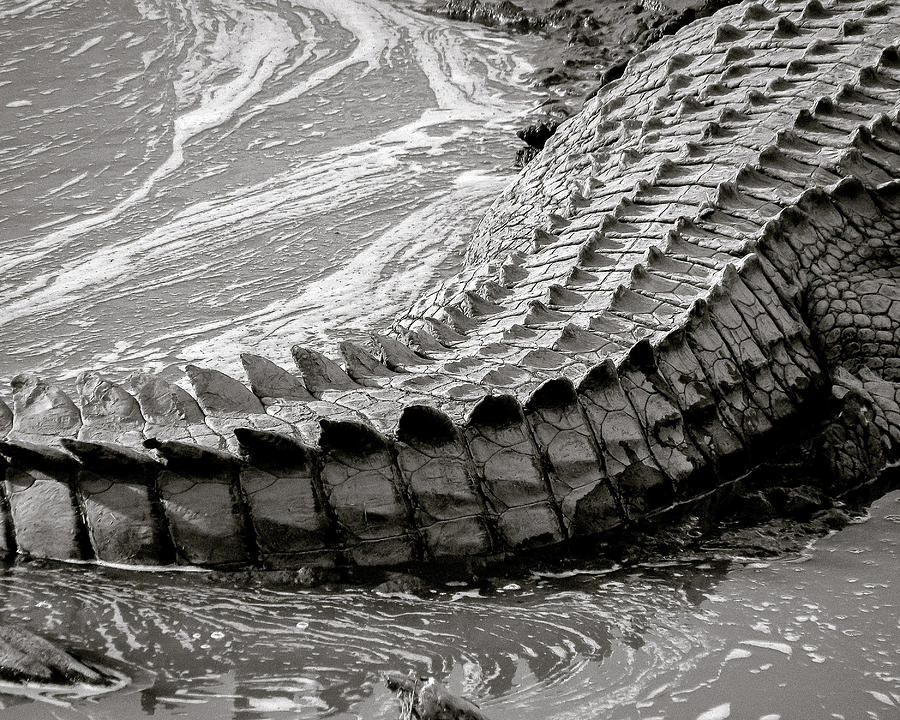 A Croc's Tail by Bart Blumberg