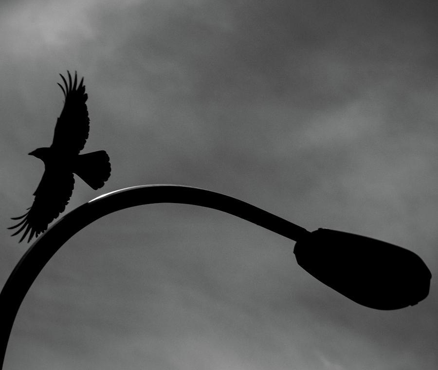 Crow Photograph - A Crow and a Streetlight by Trance Blackman