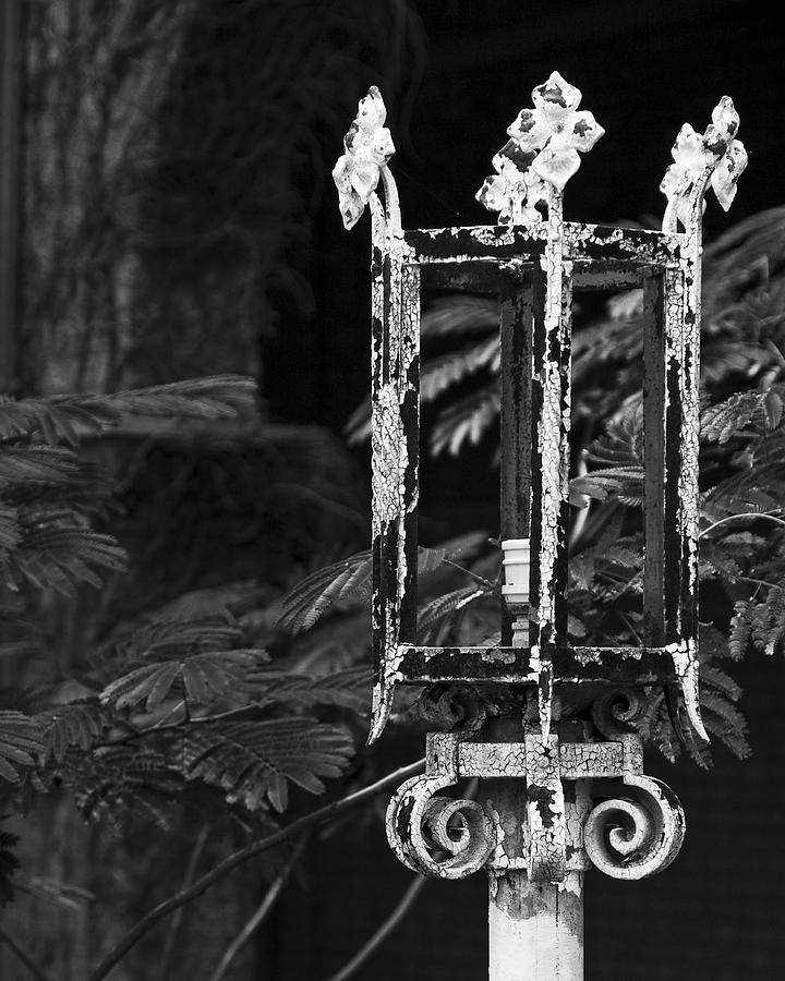 Decay Photograph - A Crown Of Thorns by Mike McMurray