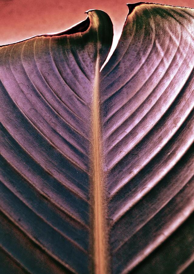 Foliage Photograph - A Cut Above by Gwyn Newcombe
