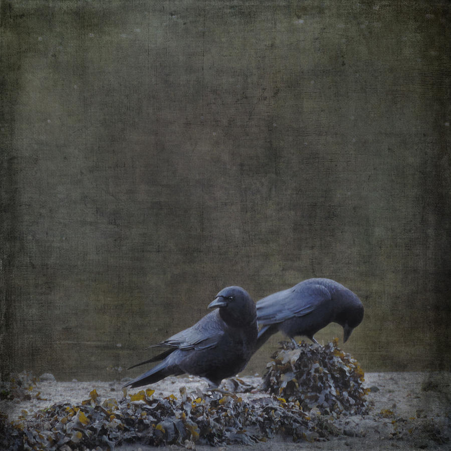 Blackbirds at the Beach by Sally Banfill
