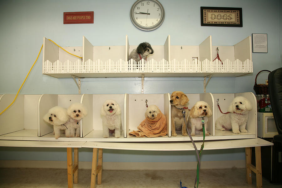 Animal Photograph - A Day At The Doggie Day Spa by Michael Ledray