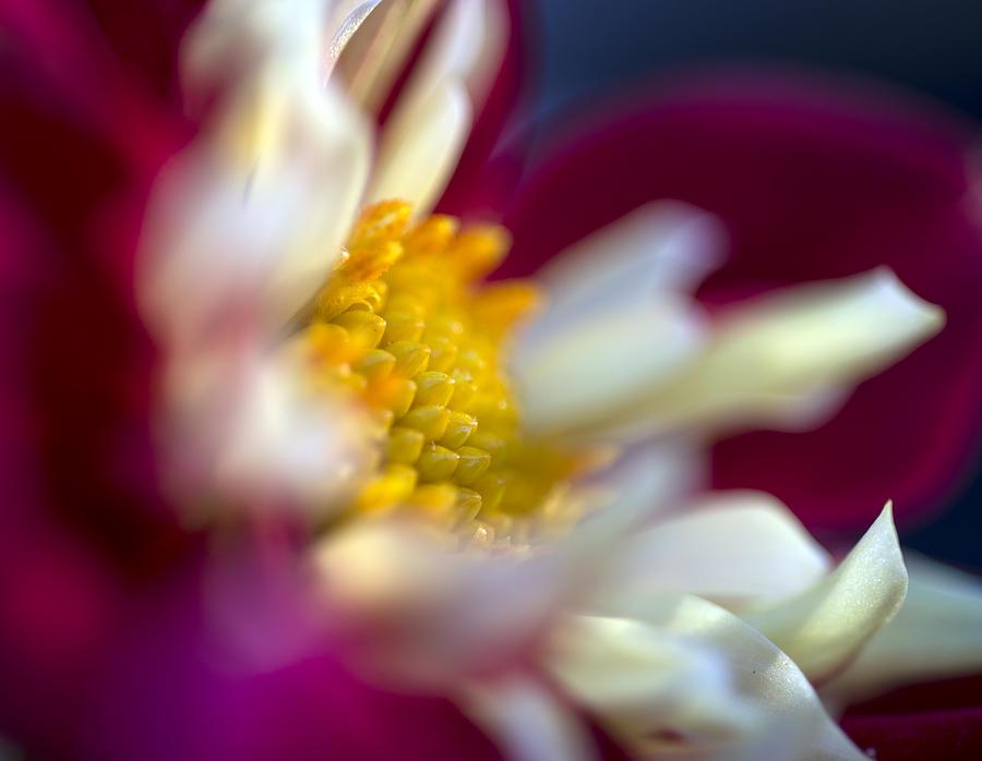 Flower Photograph - A Different Kind Of Dahlia by Kurt Shaffer