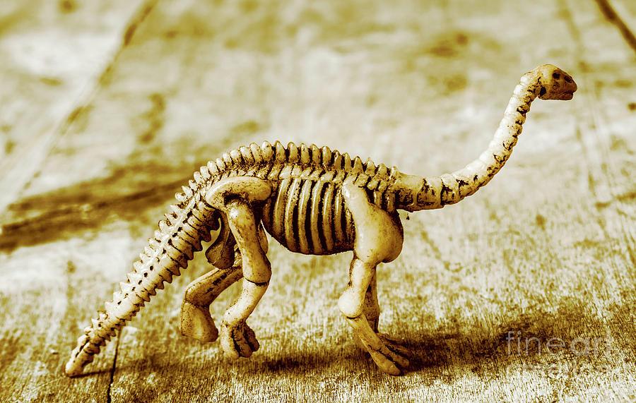 A Diploducus Bone Display Photograph by Jorgo Photography - Wall Art ...