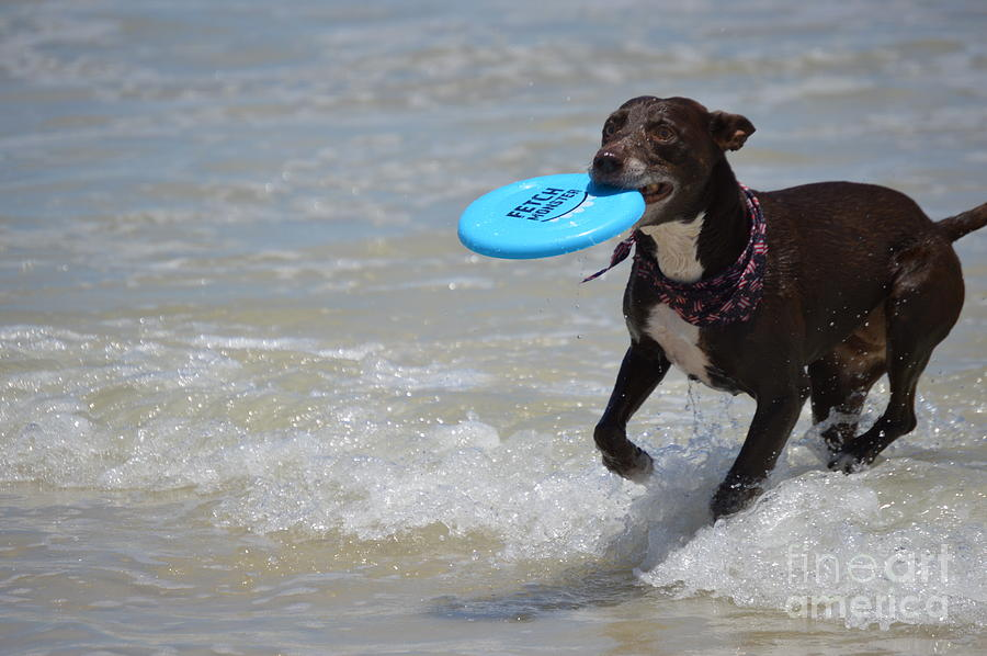 Pitbull Photograph - A Dog And Her Frisbee by Brigitte Emme
