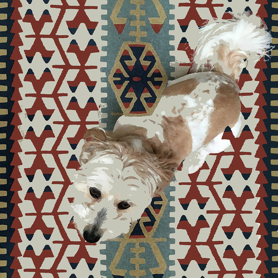 Dog Mixed Media - A Dog In On A Rug by Stan  Magnan