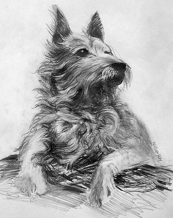 A Dog Drawing by William Hay