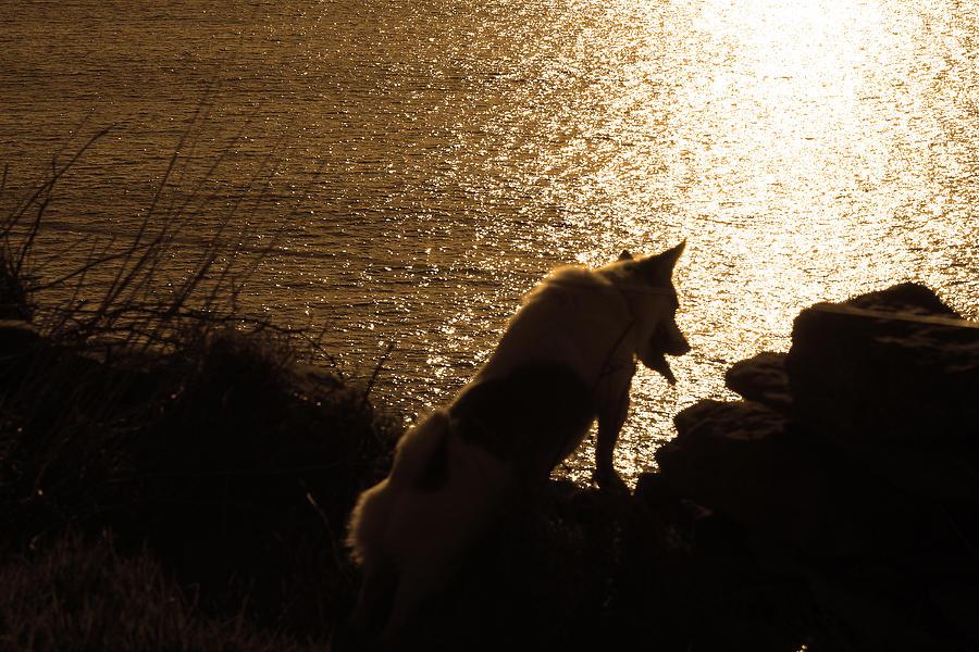 Dog Photograph - A Dogs View by Aidan Moran
