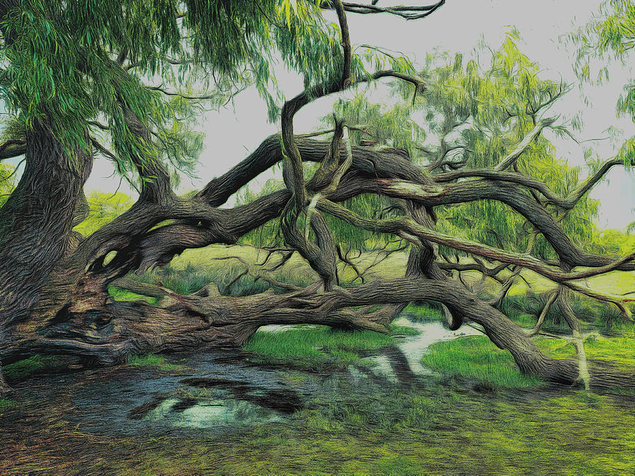 Tree Digital Art - A Dramatic Change Of Perspective by Leigh Kemp
