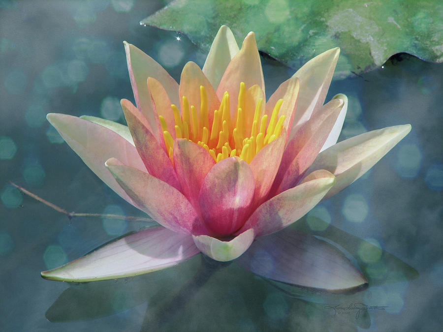 Water Lily Photograph - A Dream Within A Dream by Karen Casey-Smith