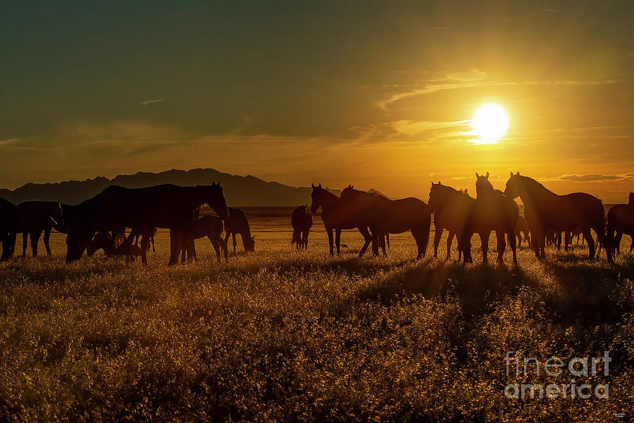 Nikon Photograph - The End To A Beautiful Day by Nicole Markmann Nelson