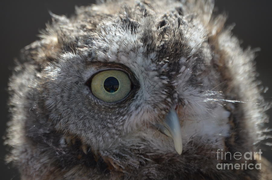 Rescue Photograph - A Eye On You by Jodie Sims