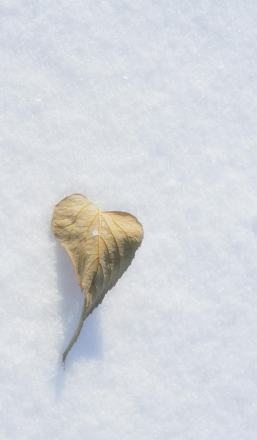 Heart Photograph - A Fading Heart by Julie Lueders