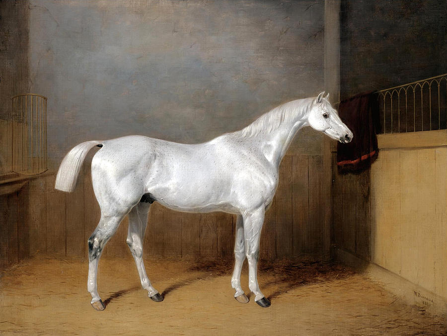 William Barraud Painting - A Favourite Grey Horse Belonging To George Reed Standing In A Loose Box by William Barraud