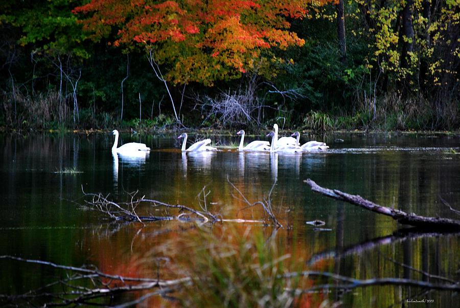Wildlife Photograph - A Fine Autumn Day II by Michelle  BarlondSmith