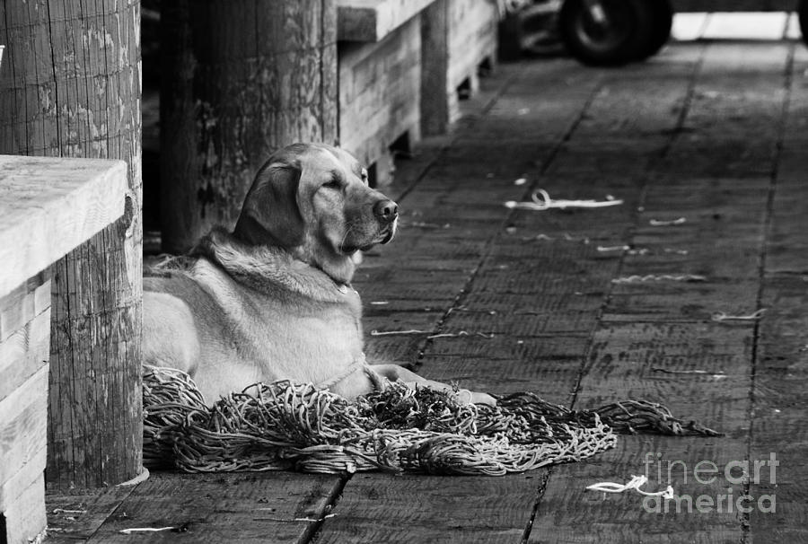 Dog Photograph - A Fishermans Best Friend by Camilla Brattemark